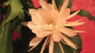 Johnny Stimson - Flower (Lyric Video)