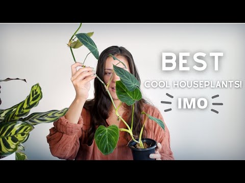 , title : 'My FAVORITE Houseplants!   favorite houseplants 2021