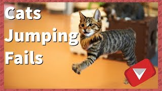 Cats Jumping Fails Compilation [2017] (TOP 10 VIDEOS)