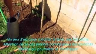 Jardinage : Comment planter un fraisier grimpant Mount Everest