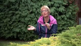 A körterozsda gombás megbetegedés elleni védelem