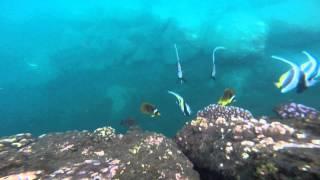 preview picture of video 'poisson dans le port de la réunion'
