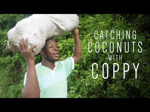 Catching Coconuts with Coppy