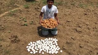 Cooking 10 KG Potatoes with 100 Eggs - Mashed Potatoes with Eggs
