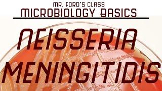 Neisseria meningitidis and  Bacterial Meningitis : Microbiology Lectures