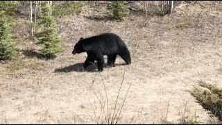 #60. Поездка в Jasper National Park, Canada. Канада глазами украинца.