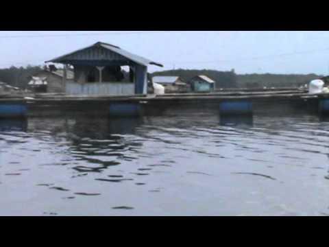 Video Pesona Wisata Wayrarem, Pekurun Lampung Utara