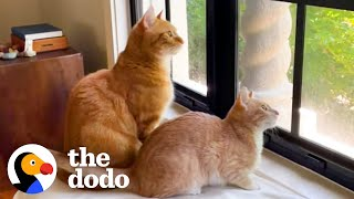 The Struggles Of Growing Up With A Little Brother | The Dodo Cat Crazy