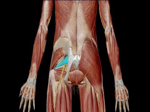 Ból dolnej części pleców nóg pociągnięcie