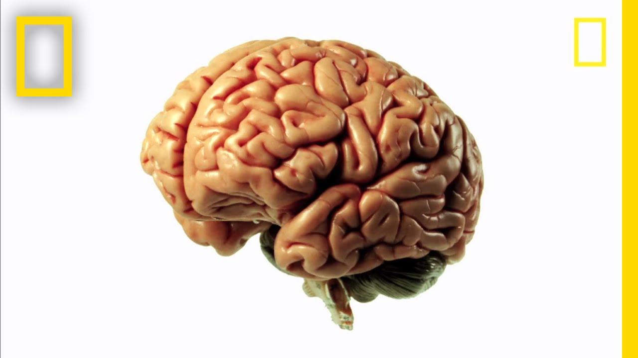 Brainworks - Mind-Bending Science! | Brain Games thumbnail
