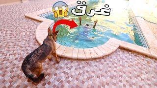 شوفو ردت فعل كلب لما شاف صاحبو يغرق   مقلب الغرق