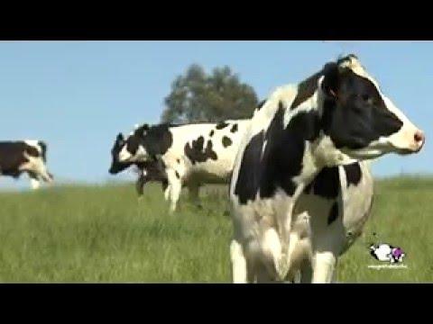 Fotograma del vídeo: Proceso de producción de la leche