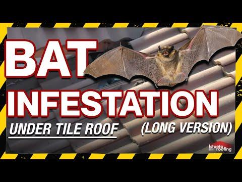 【錯誤】網傳影片宣稱:「原頭找到了,胡北武漢每家的屋頂全是住犏蝠」?