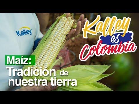 ¿Cómo es el proceso del maíz?