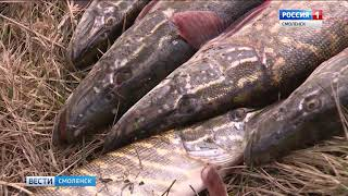 Правила рыболовства в смоленской области