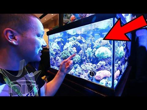 Saltwater aquariums, coral and reef tanks!