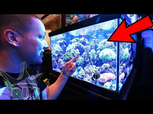 Saltwater aquariums, coral and reef tanks!