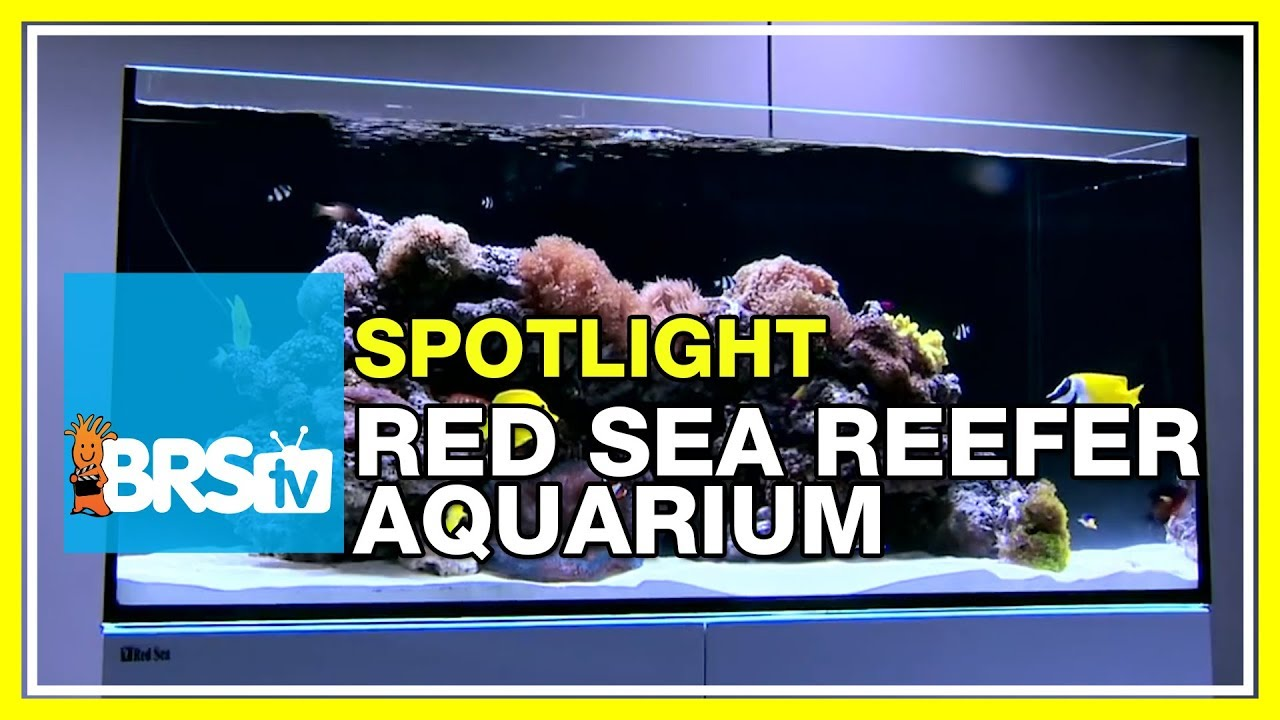Spotlight on the Red Sea Reefer Aquarium Systems - BRStv