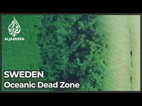 Sweden oceans: Scientists measure largest dead zone in world