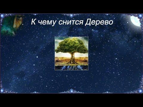 К чему снится Дерево (Сонник)