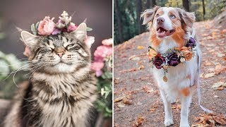 This Artist Is Making Flower Crowns For Animals And They Look Majestic
