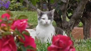 Приколы с котами   ТОП видосы смешно до боли!!!FUNNY CATS
