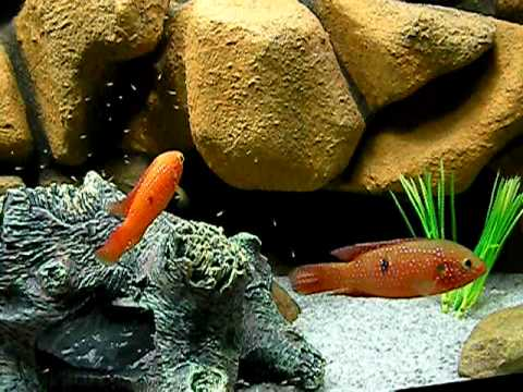 Is there paint that is safe to use on fish aquarium for Aquarium decoration paint