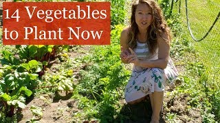 14 Vegetables to Plant NOW for Fall Harvest [Fall Gardening]