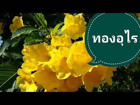 ปรสิต zaytsev.net