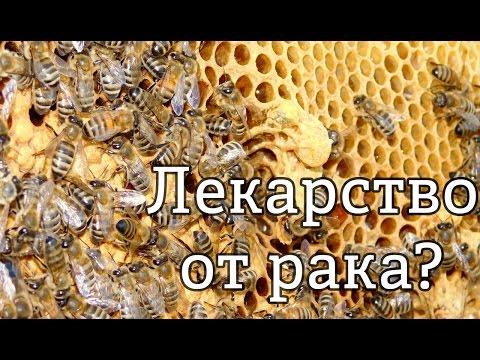 Пчелиный яд – лекарство от рака?