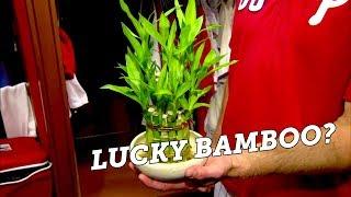 Heard it on Bridge Teaser - Phillies Bamboo