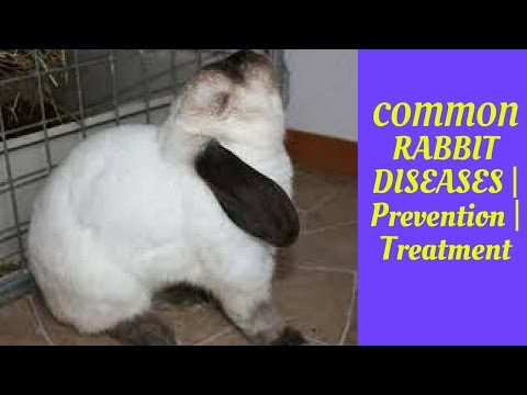 , title : 'COMMON RABBIT DISEASES | Prevention | Treatment