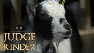 Goat Gets Barred From Pub | Judge Rinder