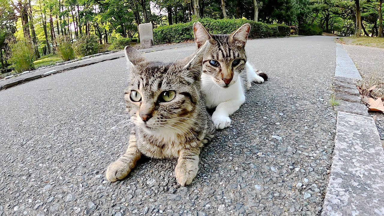 白内障の先輩猫の傍に行って、そっと寄り添うキジトラ猫