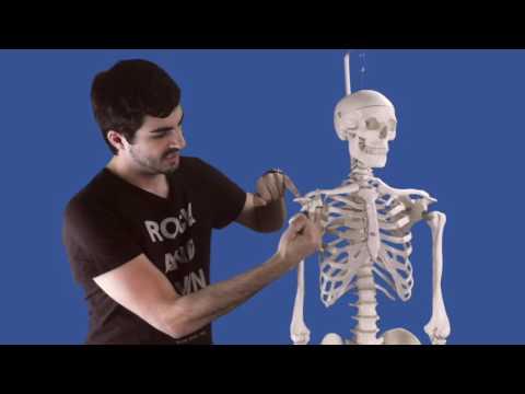 Rückenschmerzen im Bereich der Lendenwirbelsäule Behandlung Volksmedizin