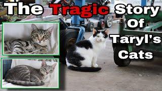 The Tragic Story Of Taryl's Cats