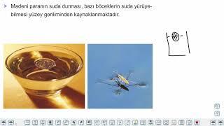 Eğitim Vadisi 9.Sınıf Fizik 6.Föy Yapışma ve Birbirini Tutma Konu Anlatım Videoları