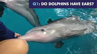 Dolphin Trivia with Winter and Hope