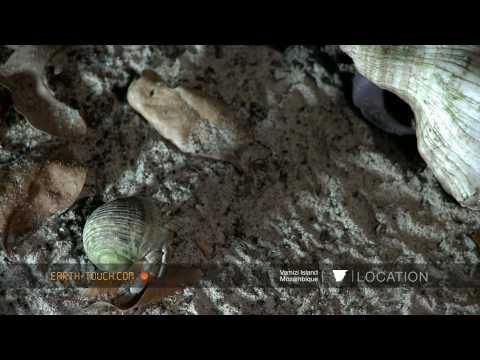 أفلام الطبيعة HD …على جزيرة المرجان