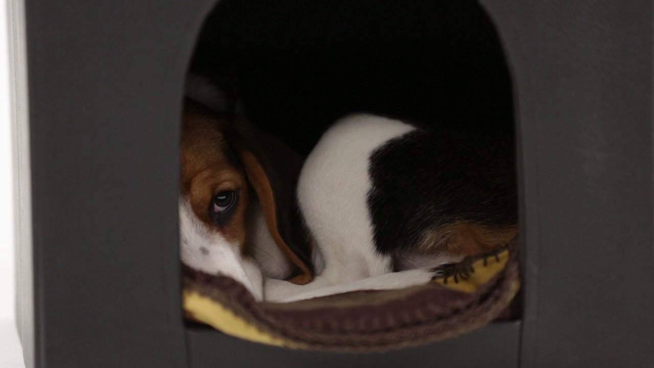 Video von: Hundebox Sitzhocker