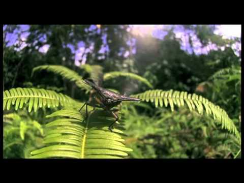 カメムシの仲間の飛翔