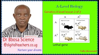 Genetics A level lesson 2 of 2 (A-level)