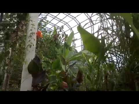 , title : 'Amazing Greenhouse at Torbay