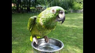 Stuff my 50 year old parrot says. Warning- a little salty at the end! Instagram @babybirby