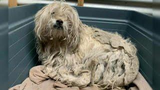 Обиженный на весь мир пёс, семь лет не видел белого света!