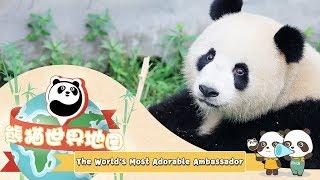 The World's Most Adorable Ambassador | iPanda
