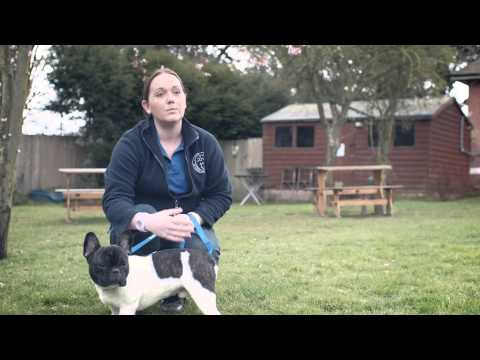 Pedigree 2013 Feeding Brighter Futures Ad: Teddy the French Bulldog
