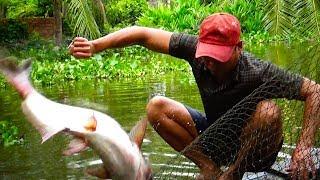 Kéo lưới bắt cá tra 6 năm tuổi nhìn đả con mắt.