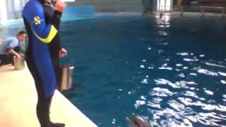 Dolphin Training At Indianapolis Zoo (December 2010)