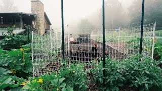 Two Chicken Garden Systems (That Do Most Of The Work)